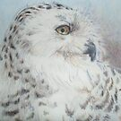 Snow owl with feathers and the Look by lynnieB