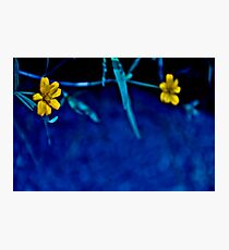 Alice in wonderland...: Featured work: Let-there-be-light-art Group Photographic Print