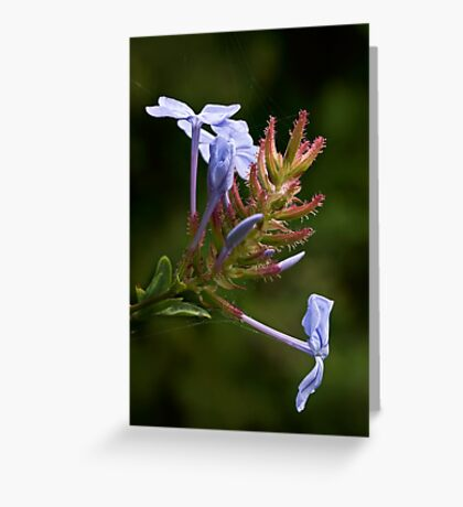 Blooming by the lake Greeting Card