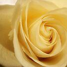 Yellow Rose  by DearMsWildOne