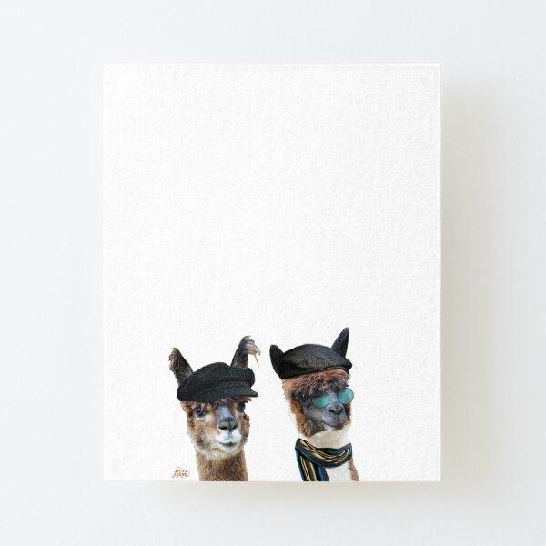Best Friends Two Albacas Llamas Canvas Mounted Print