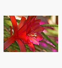 Nature Beauty Photographic Print