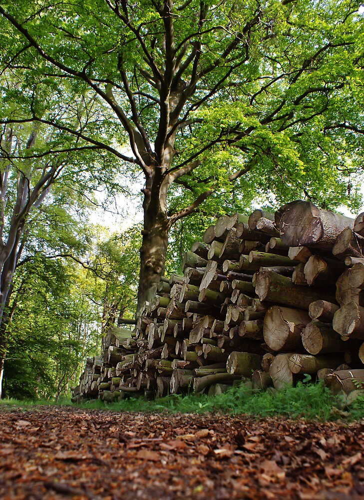 Logs in woods by KWTImages