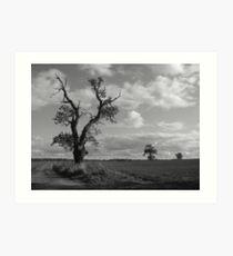 Three gnarled trees in Nowton Art Print