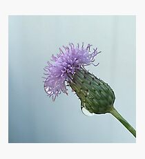 Raindrops on a Thistle Photographic Print