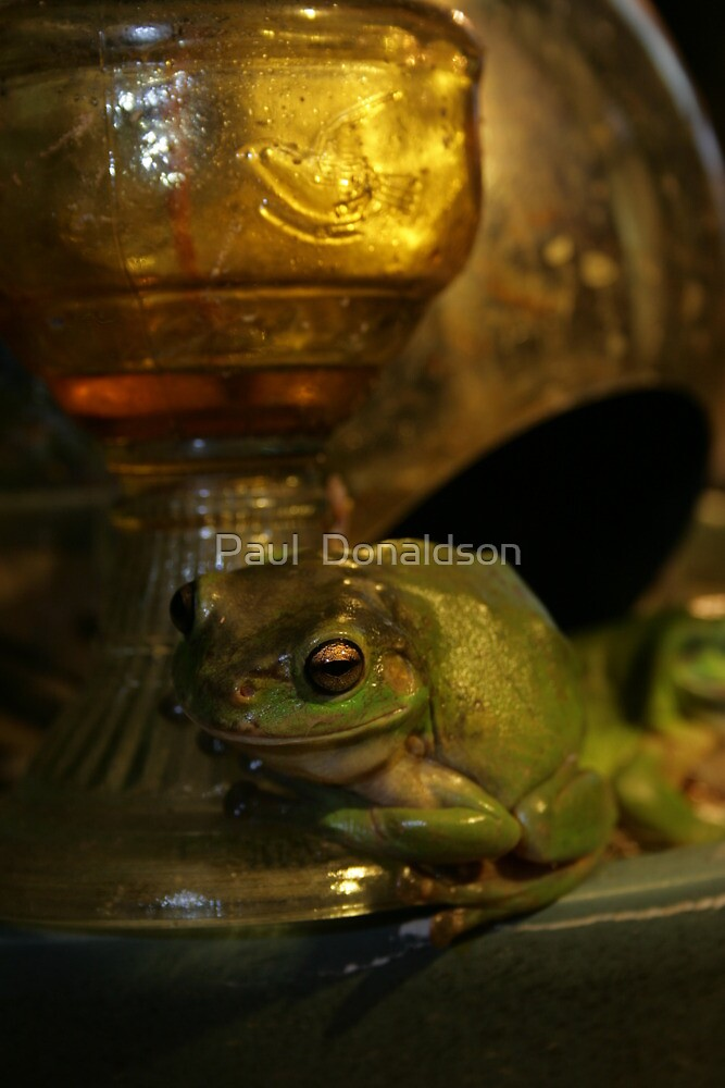 Old frog waiting for supper by Paul  Donaldson