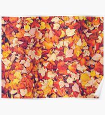 Scarlet Leaves  Poster