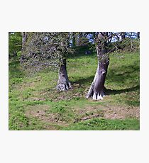 Ent walking down a hill Photographic Print