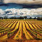 grapevines and birds by mirekkrejci