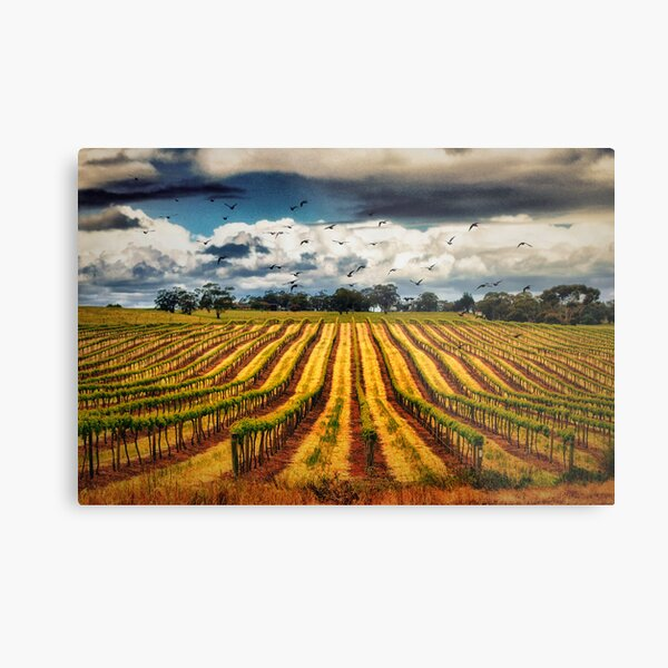 grapevines and birds Metal Print