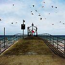 birds by the sea by mirekkrejci