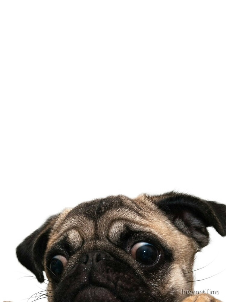 Worried Pug by InternetTime