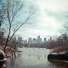 Central Park by Steve Edwards