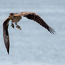 Osprey Catches a Fish in Each Talon by David Friederich