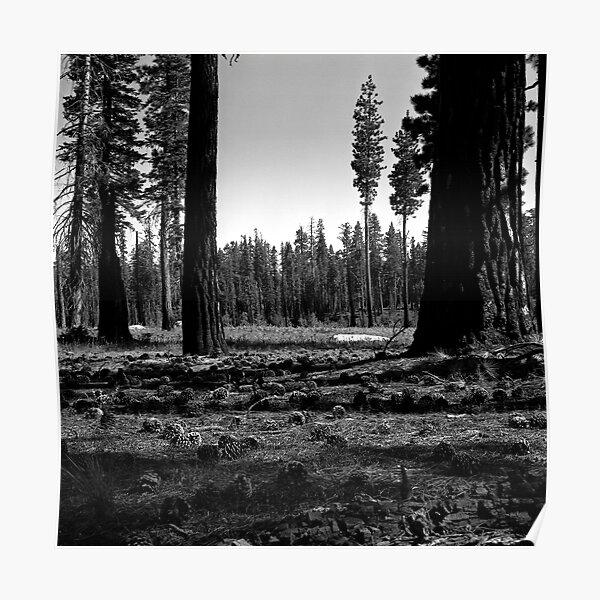 Near Hetch-Hetchy in Yosemite N.P.  Poster