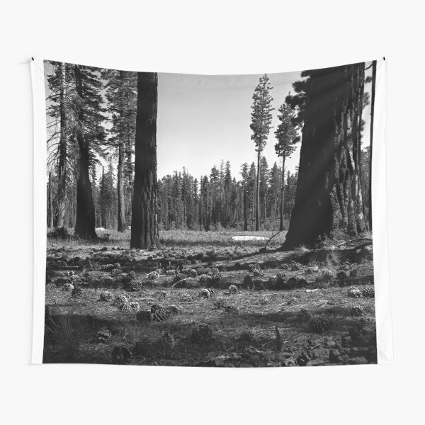 Near Hetch-Hetchy in Yosemite N.P.  Tapestry