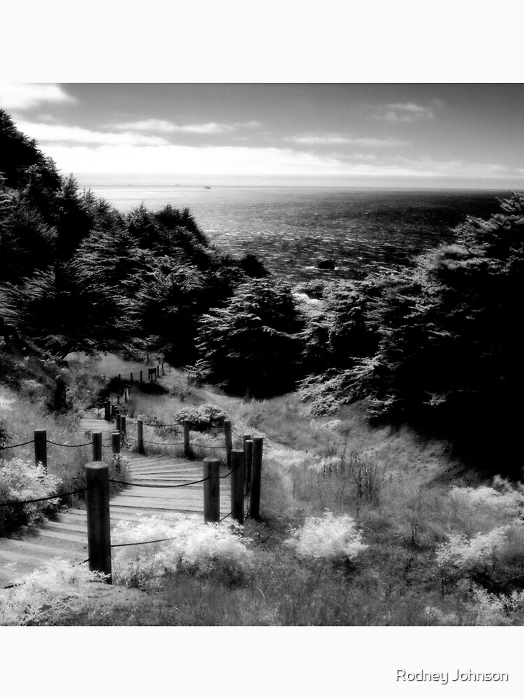 Land's End - San Francisco  by rodneyj46