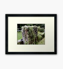 Moss/Lichen on fence Post? Framed Print