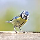 Looking for Crumbs by dilouise