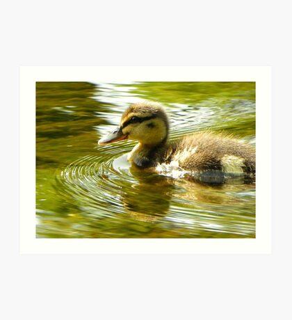 Lone Duckling-River Nidd, Knaresborough, North Y'shire Art Print