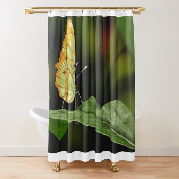 Malachite butterfly on a leaf Shower Curtain