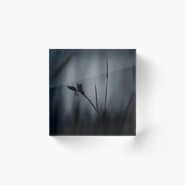 Enchanted morning dragonfly Acrylic Block