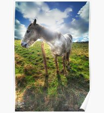 Welsh Pony Poster