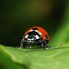 Ladybug by VladimirFloyd