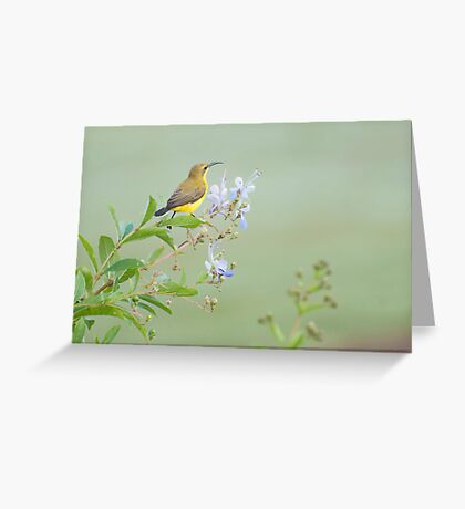 Little Sunbird Greeting Card