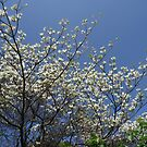 the trees in mighty bloom... by fladelita