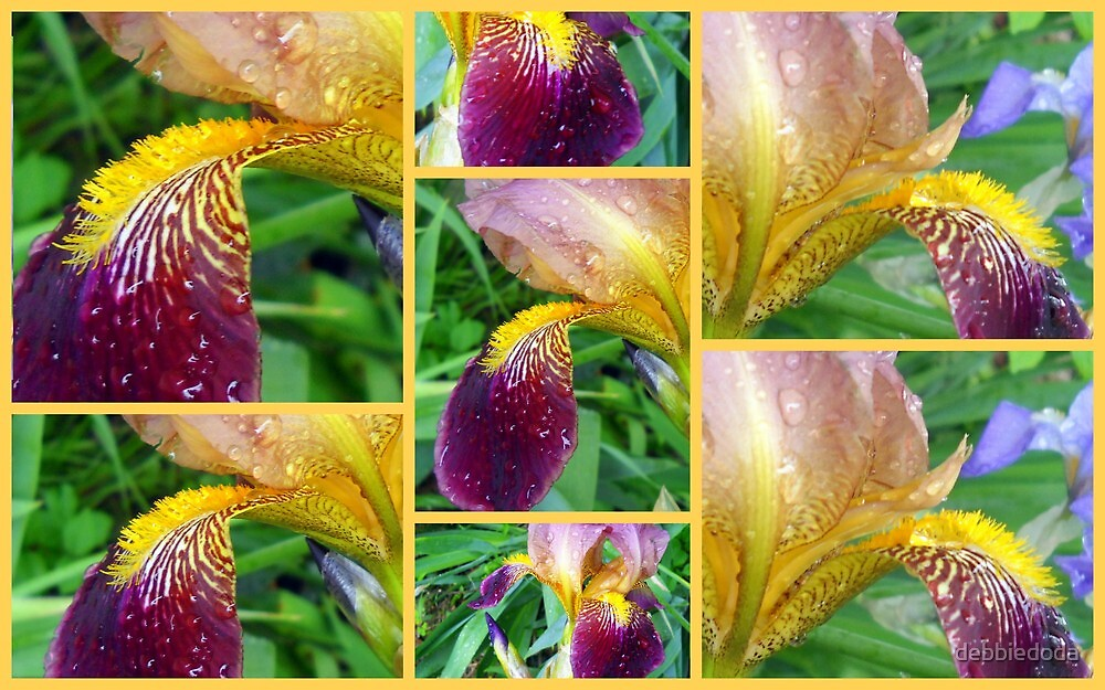 Irises' Bits and Pieces by debbiedoda