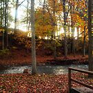 As Autumn Softly Passess by Virginia Shutters