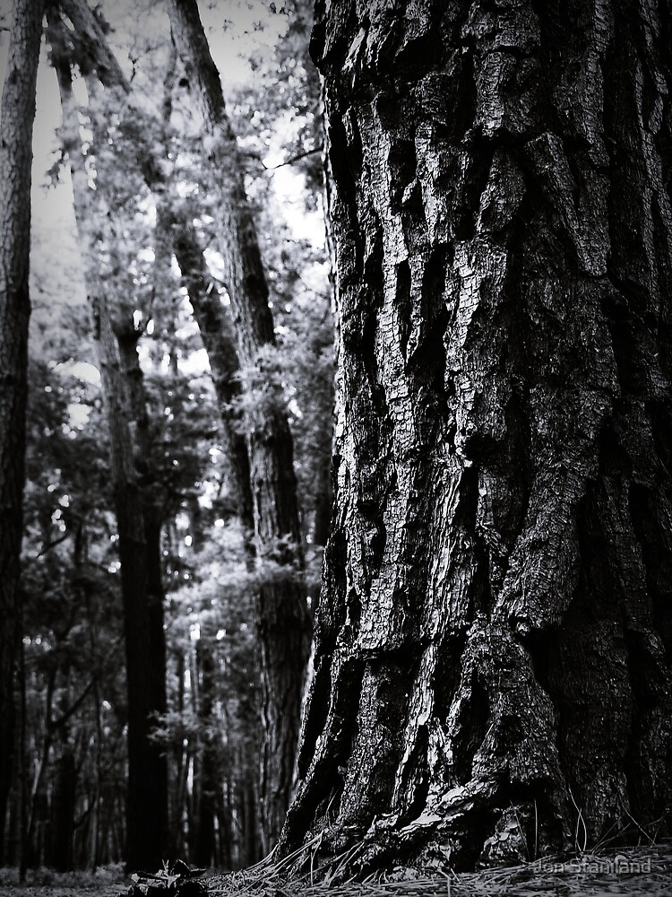 Old Pine by Jon Staniland