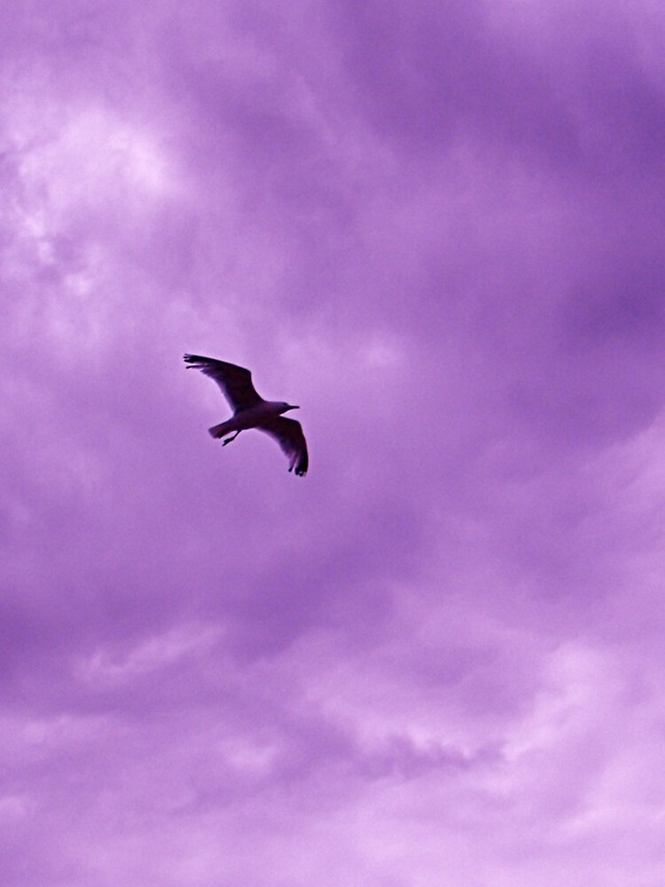 Bird in the sky 2 by robsteadman