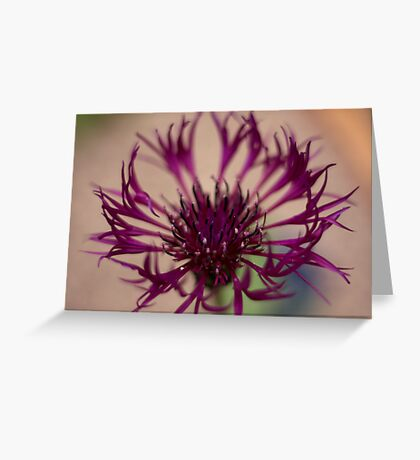 Centaurea-Amethist Dream Greeting Card