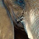 Water For Elephants by Susan  Bergstrom