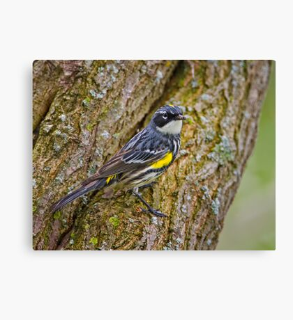 Meal on a Tree Canvas Print