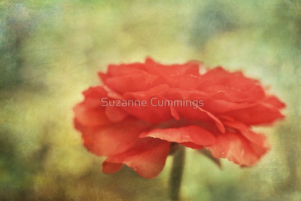 Red Ruffles by Suzanne Cummings