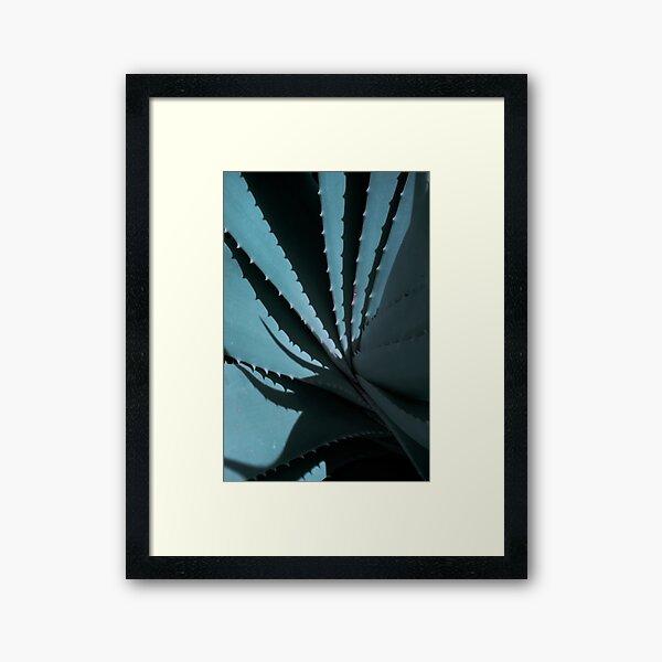 Aloe 02 Gerahmter Kunstdruck