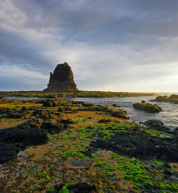 Evening, Cape Schanck by Harry Oldmeadow