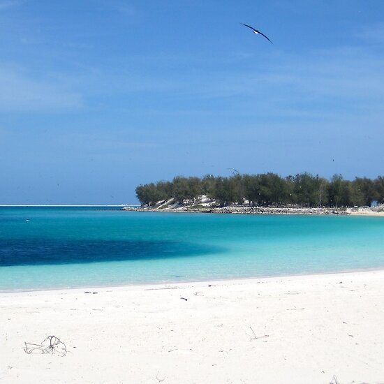 """Island Beach People: """"'Wisdom' Returns To Midway Atoll"""" By Gina Ruttle"""