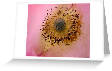 Buy Greeting Cards and Postcards